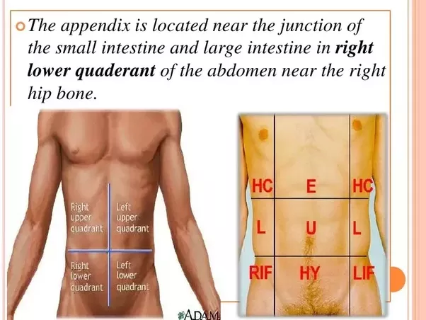 In which of the 9 abdominal regions is the appendix ...