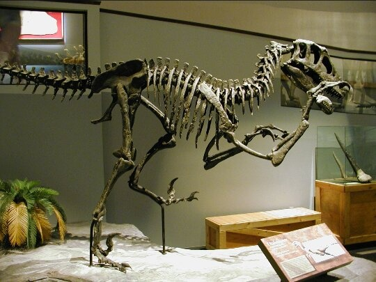 1dd7afa87bbf Obviously, it would be nice to mount real bone. Mostly however, cast  replicas of bones are used, because of a few factors: