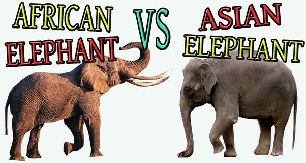 Asian Elephant Wiki