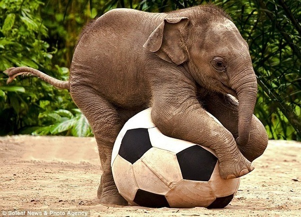 what are some cute pictures of elephants quora