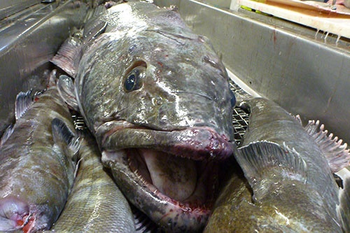 What is the best tasting fish to eat quora for Best white fish to eat