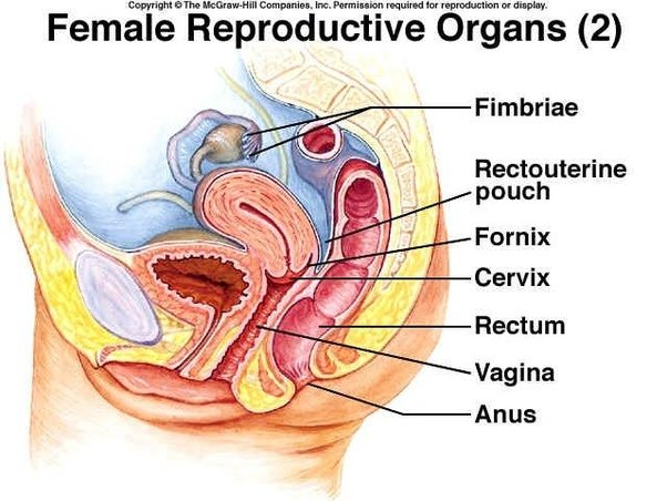 Can a woman get pregnant by having anal sex