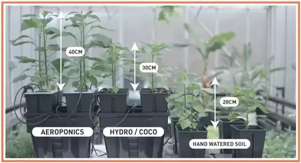 What Is The Difference Between Aeroponics And Hydroponics