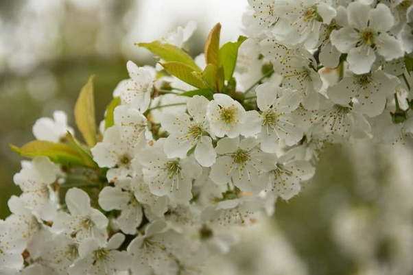 What Are Some Of The Most Beautiful Flowers Quora