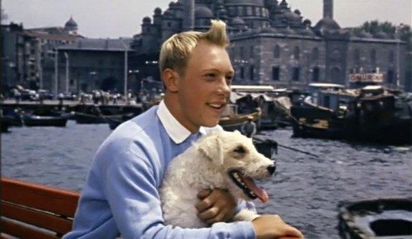 Tintin Dog Breed