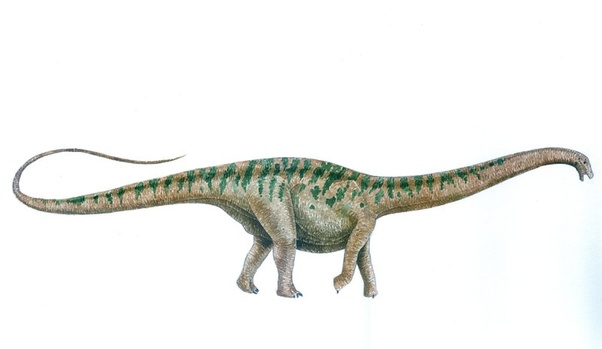 how did a brontosaurus differ from a brachiosaurus quora