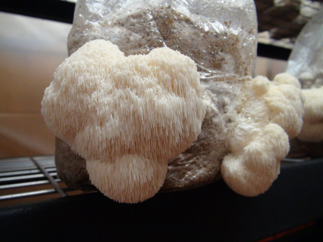 What is the best way to grow mushrooms in the home? - Quora