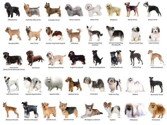 Mixing Different Dog Breeds