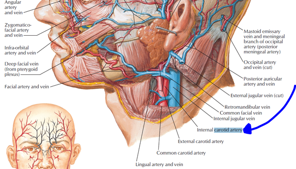 How To Learn Anatomy Effectively I Am A First Year Mbbs Student