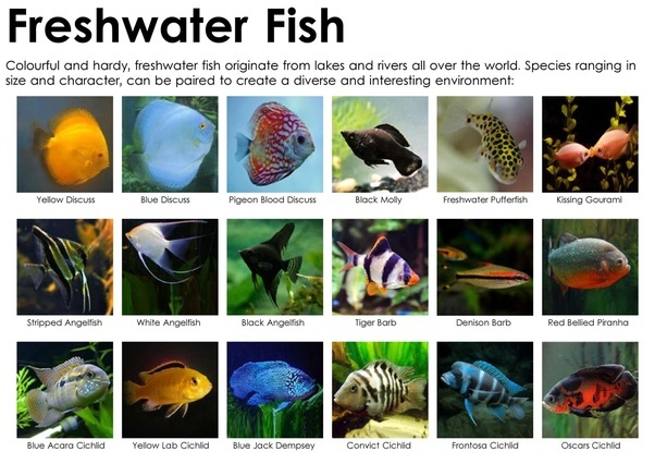 What Are Some Examples Of Freshwater Fish Quora