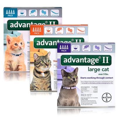 What is the best medicine for cat allergies? - Quora
