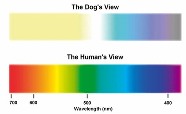 What Color Do Cats See Best