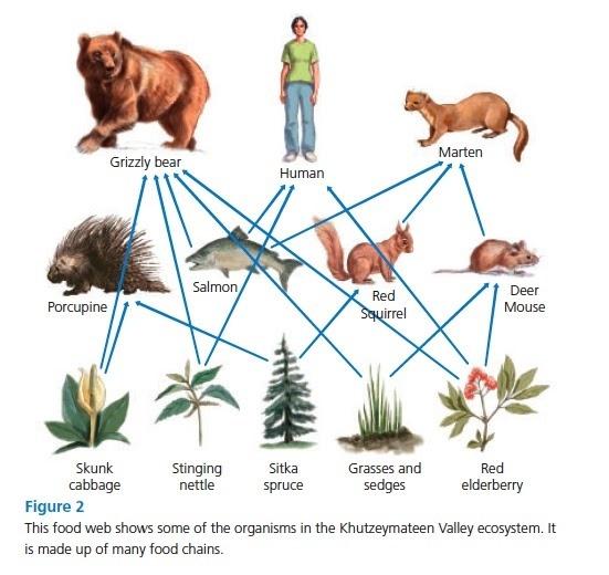 World S Largest Animal Food Chain