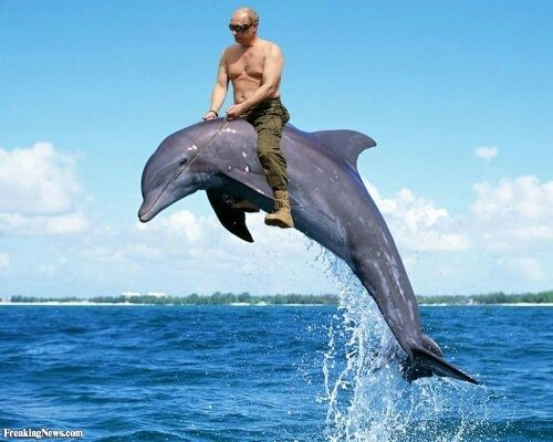 Is this picture of Vladimir Putin riding a bear fake or ... Vladimir Putin Funny Bear
