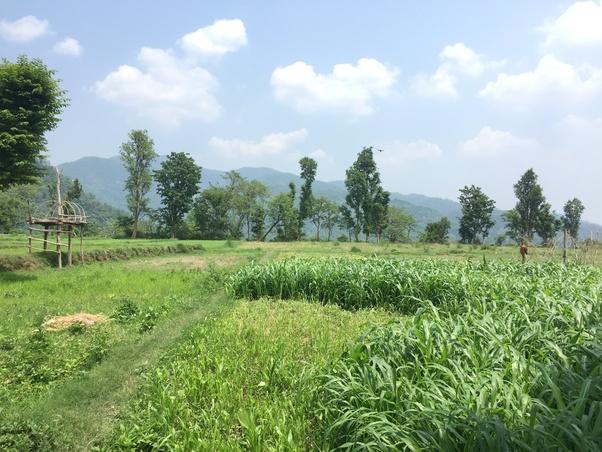 advantages of village life