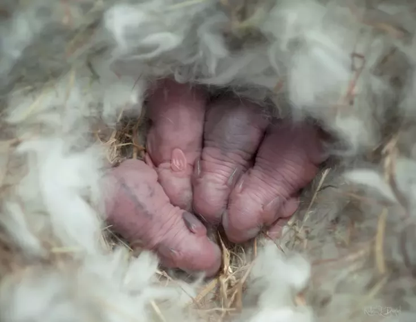 What Are Some Name Ideas For Baby Rabbits Quora