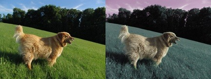 Can All Dog See In 2d Or 3d How Many Color Do Dogs See