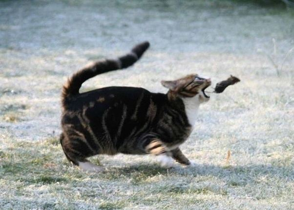 Why Do Cats Play with Their Prey?