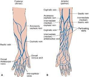 Leg Diagram Veins Of Left - Block And Schematic Diagrams •