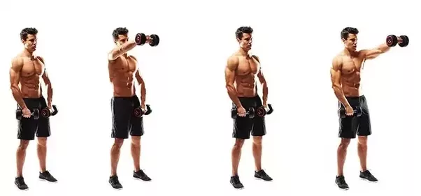 What is the purpose of the deltoid muscle? - Quora