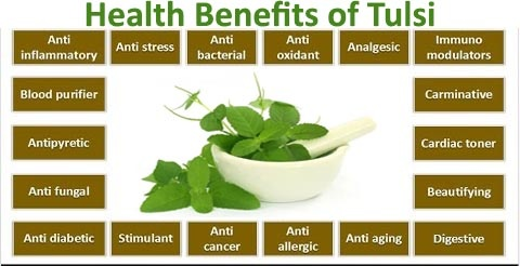 Image result for tulsi plant benefits