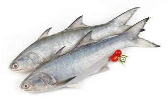 What Is The Salmon Fish Called In Hindi Quora