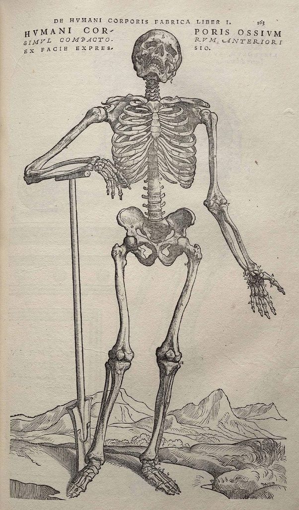 Who is called as father of anatomy? - Quora