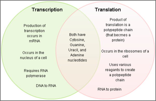 How Is Dna Replication Different From Rna Transcription Quora