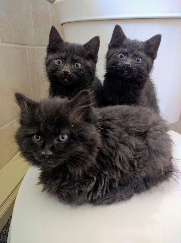 Here S A Photo Of Kittens Who Spent Their First Two Weeks Domesticated Life In My Bathroom