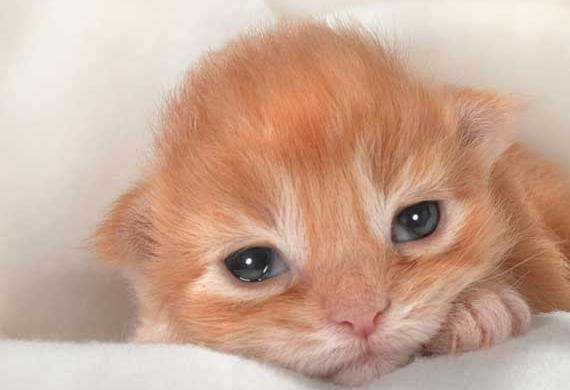 A 3-week-old cat hasn't opened its eyes yet. What can I do ...