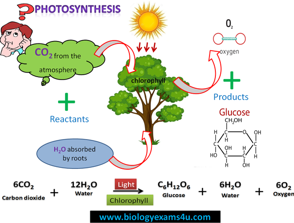 photosynthesis byproducts equation main correct