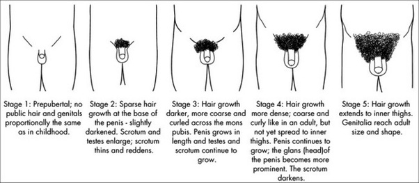 puberty stages