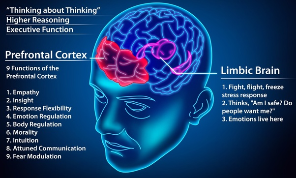 Image result for morality prefrontal cortexes