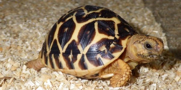 Can we legally pet a turtle or tortoise in India? - Quora