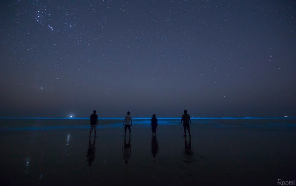 Yes You Read It Right Can See Bioluminescence Every Month In Stan There Is A Newly Discovered Beach Named Sapat