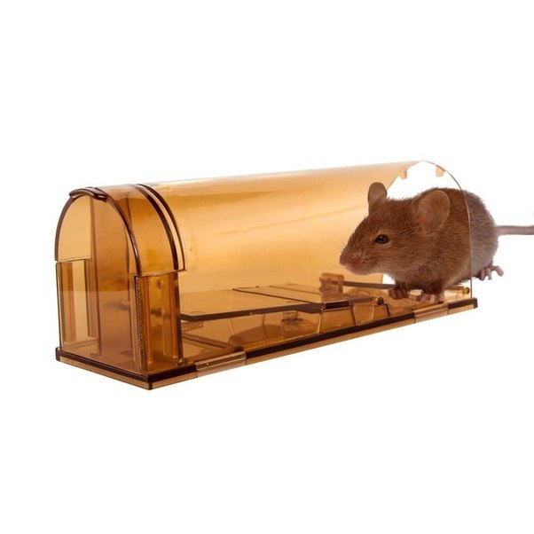 what is the best mouse trap design quora. Black Bedroom Furniture Sets. Home Design Ideas