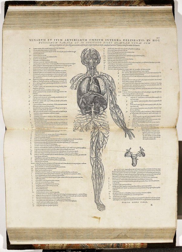 Why is Vesalius called the father of anatomy? - Quora