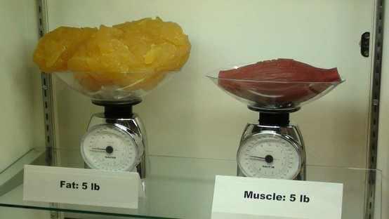 Rapid fat loss diet by lyle mcdonald photo 7
