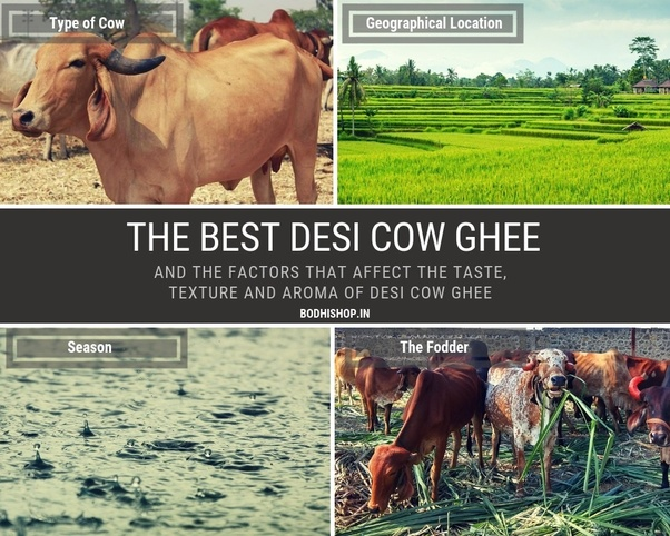 What is the real price of cow ghee in India? - Quora