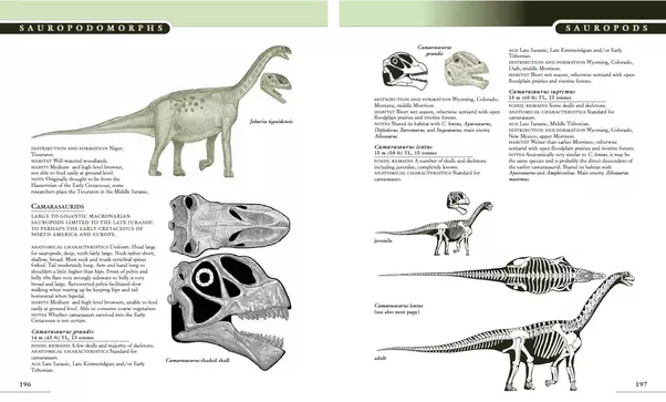 which is the best comprehensive book about dinosaurs quora rh quora com the princeton field guide to dinosaurs second edition review the princeton field guide to dinosaurs gregory s. paul