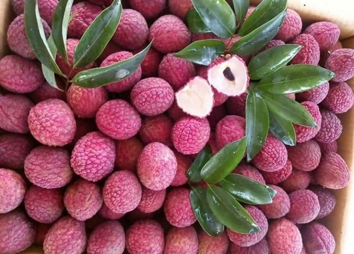 Which fruit is the best fruit in India? - Quora