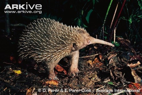 What Are Some Examples Of Mammals That Lay Eggs Quora