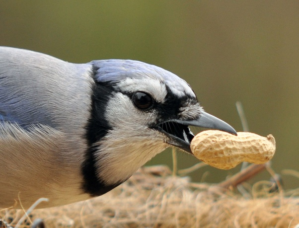 How Do Birds And Animals Disperse Seeds Quora