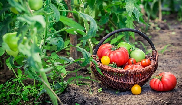 You Might Tend To Do Some Common Mistakes That Can Hinder The Development Of A Healthy Garden Read Out Below Tips