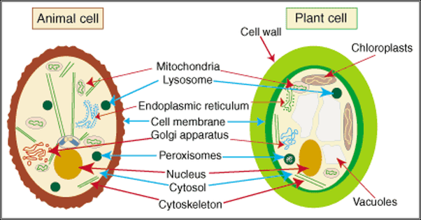 What are the main differences between plant and animal cells quora animal plant cell differences image lifted from sparknotes sparknote on cell differences ccuart Images