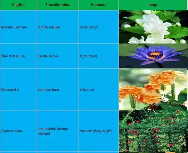 What is your favorite kannada word quora they form the lyrics of several hit kannada songs here is a list of flowers and their names in kannada see if you can recall some of the melodious songs stopboris Image collections