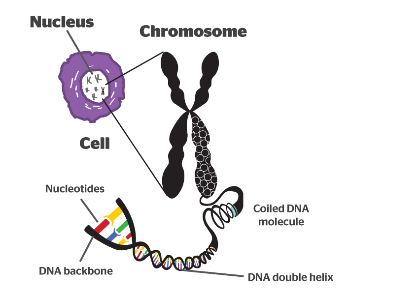 what is a chromosome quora
