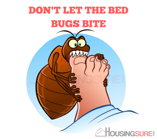 Is anyone else in Bangalore suffering from 'bedbugs'? - Quora
