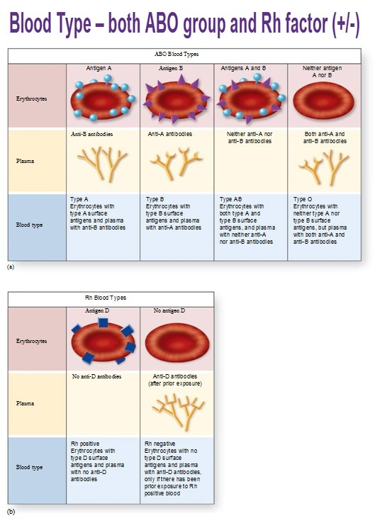 What are the characteristic of people with O+ blood group ...