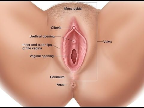 How to lick a womens vagina